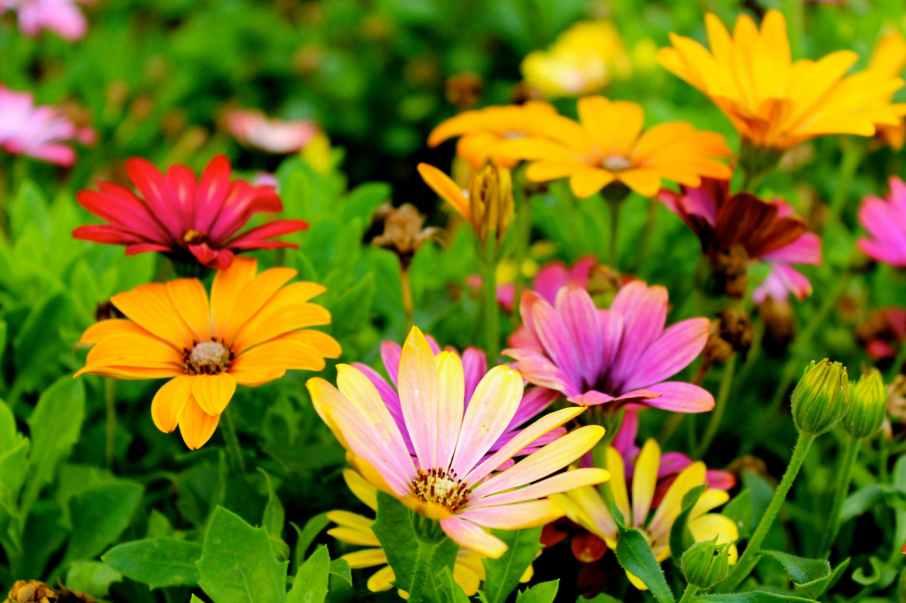 beautiful blooming blossom blur