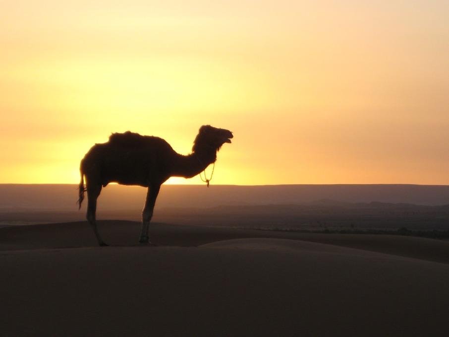 desert-242486